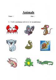 English Worksheet: Vertebrate or Invertebrates