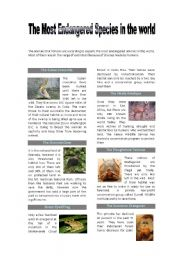 English Worksheet: The most endangered species reading-environmental problems