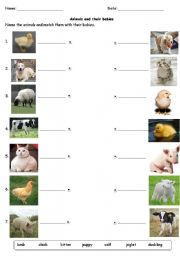 English Worksheets: Animals and their babies