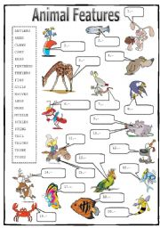 English Worksheets: Animal Features (2/2): Matching Activity