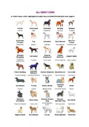 English Worksheets: all about dogs