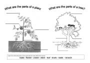 English Worksheet: The parts of a plant and a tree