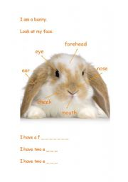English Worksheets: Bunny Face