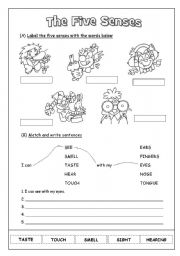 English Worksheet: The Five Senses