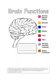 human brain functions esl worksheet by iman bendjedidi. Black Bedroom Furniture Sets. Home Design Ideas