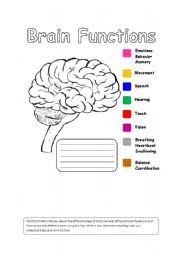 Human Brain Functions - ESL worksheet by Iman Bendjedidi