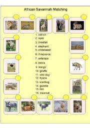 English Worksheets: African Savannah Matching