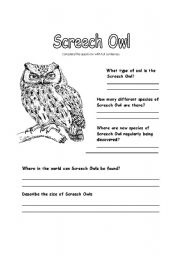 English Worksheets: All about Screech Owls