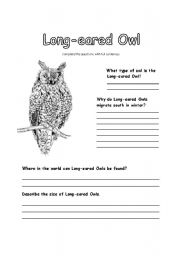 English Worksheets: All About Long-eared Owls