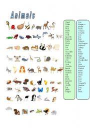 English Worksheets: Animals-67 animals matching