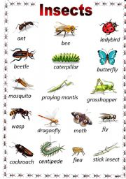 English Worksheet: Insects Poster