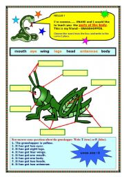 English Worksheets: Parts of the body & has got