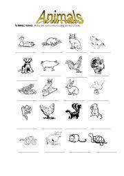 English Worksheets: identify the animals