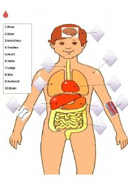 English Worksheets: Match the internal organs