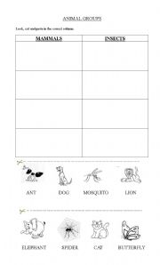 English Worksheets: mammals and insects