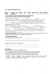 English Worksheet: Central Nervous System