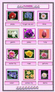 Flowers esl worksheet by maguyre flowers mightylinksfo