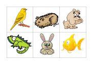 English Worksheets: Pets� bingo
