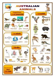 Australian animals: a pictionary (fully editable)