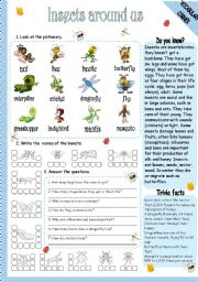 English Worksheet: INSECTS AROUND US