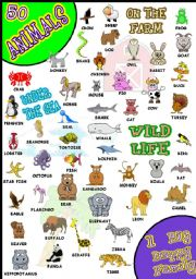 English Worksheet: 50 ANIMALS PICTIONARY WOW!