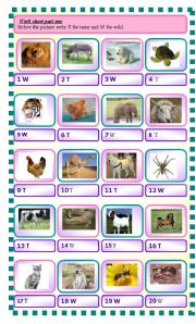 English Worksheets: wild and tame animals