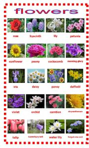 Flowers Esl Worksheet By Lokyuen