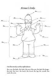 English Worksheets: Homer�s body