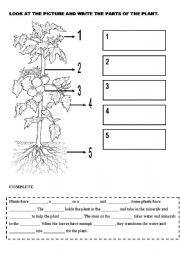 Plant parts diagram elementary basic guide wiring diagram plants esl worksheet by spanish2 rh eslprintables com parts of a plant diagram plant anatomy diagram ccuart Gallery
