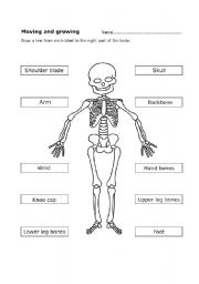 photo relating to Printable Human Skeleton referred to as Human skeleton - ESL worksheet via Mariola PdD