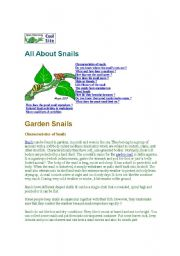 English Worksheets: All about snails