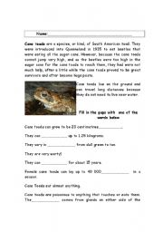 English Worksheets: Cane Toads