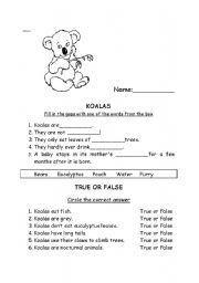 English Worksheets: Koalas