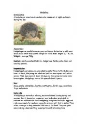 English Worksheets: hedgehogs