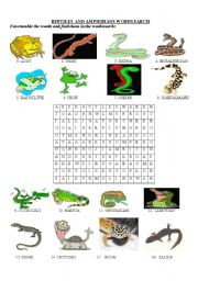 English Worksheet: Reptiles and amphibians wordsearch