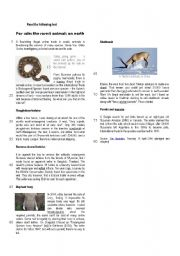 English Worksheet: Endangered species: For sale: the rarest animals on earth