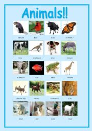 English Worksheets: Animals pictionary.