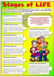 English Worksheets: STAGES OF LIFE (Part 2)