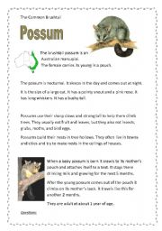 English Worksheets: Possum