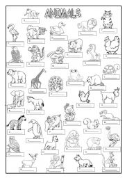 English Worksheets: ANIMALS (key  included)