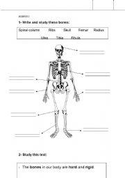English teaching worksheets: Bones