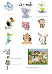 English Worksheets: Animals Exercise