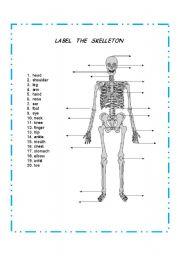 English Worksheet: LABEL THE SKELETON