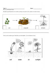 english worksheets growth and needs of plants. Black Bedroom Furniture Sets. Home Design Ideas