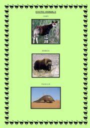 English worksheet: EXOTIC ANIMALS!!