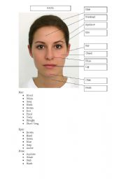 English Worksheets: The Human Face Vocabulary