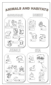 animals and habitats esl worksheet by claudiafer. Black Bedroom Furniture Sets. Home Design Ideas