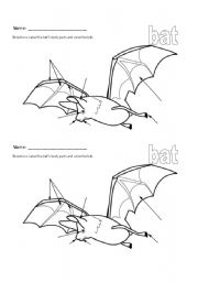 English worksheets: Bat Stellaluna Body Part Labeling Worksheet