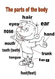 English Worksheets: the parts of the body