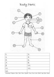 Worksheets Body Parts In Spanish Worksheet spanish body parts worksheet in image tips